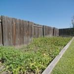 10 - garden
